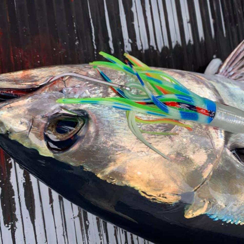 Blue fin tuna and lure portland Victoria